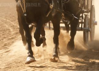 Konie Morskie Oko
