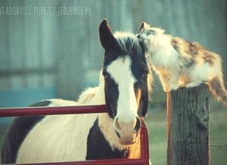 Jak chwalić zwierzęta