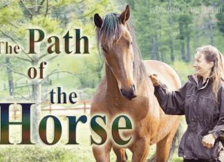 droga konia z napisami